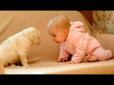 WHEN DOGS & BABIES COLLIDE