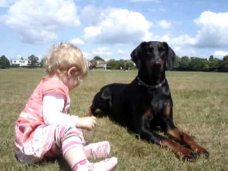 Doberman protects baby toddler at the park. MUST SEE!